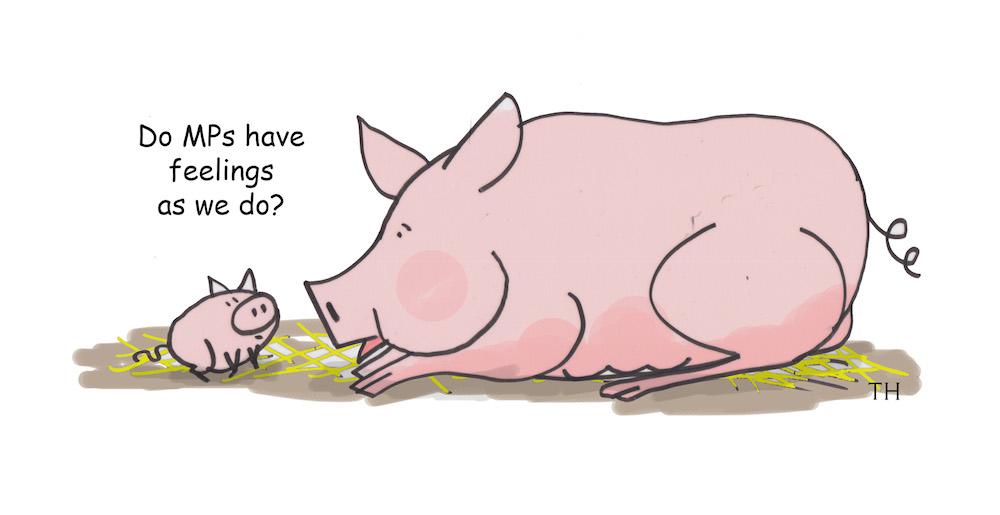 MP pigs cartoon