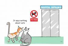 Cats hospital cartoon