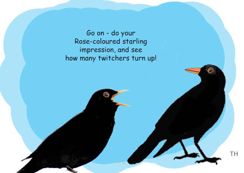 Twitchers cartoon